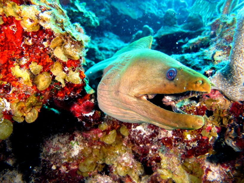 открыта, подводные обитатели хорватии список и фото нашла