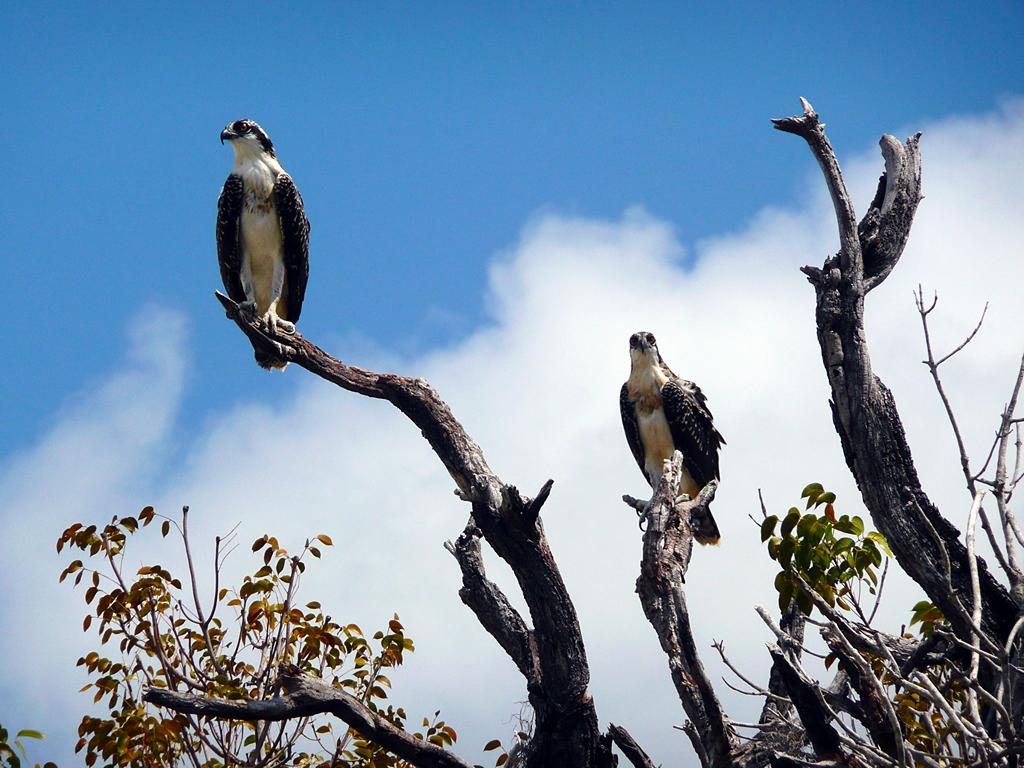 Parc national des Everglades (États-Unis d''Amérique)